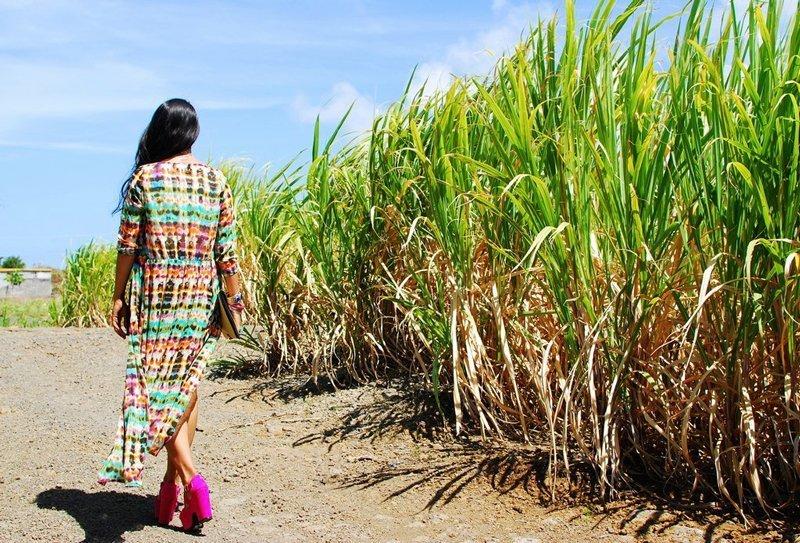 mauritius sugarcane